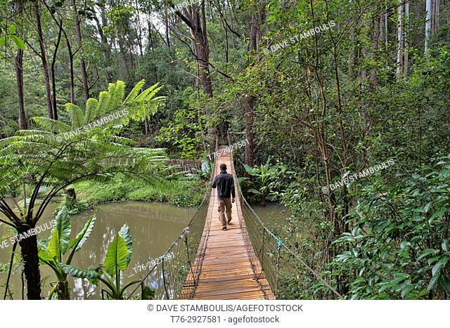 Forest path in Vakona Reserve, Andasibe, Madagascar