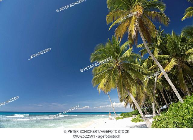 palm fringed dream beach on the Caribbean Island Isla Saona, Dominican Republic, Carribean, America