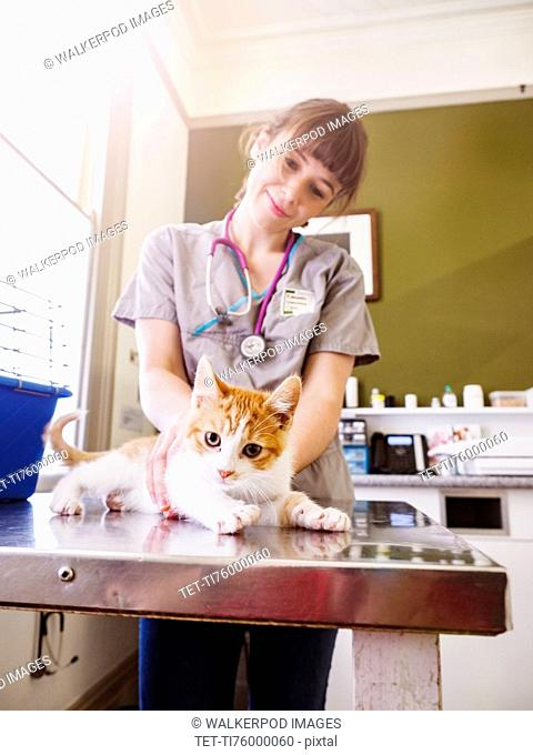 Vet holding kitten on table