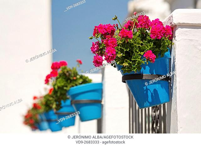 Geranium flowers in a pot. White Village of Mijas, Malaga province, Costa del Sol, Andalusia, Spain Europe