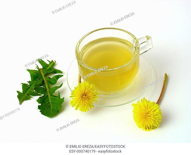 Dandelion infusion Taraxacum officinale