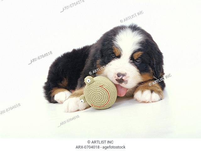 A puppy playing with a ball