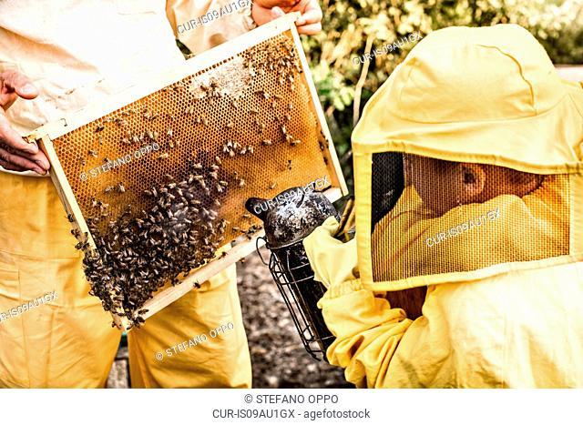 Young boy in beekeeper dress, using bee smoker