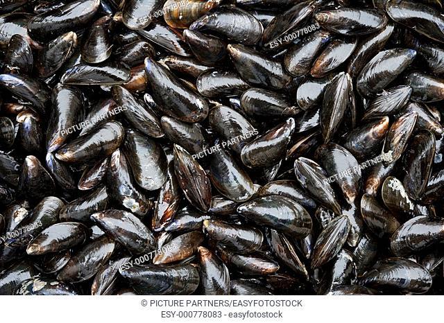 Fresh closed mussels full frame
