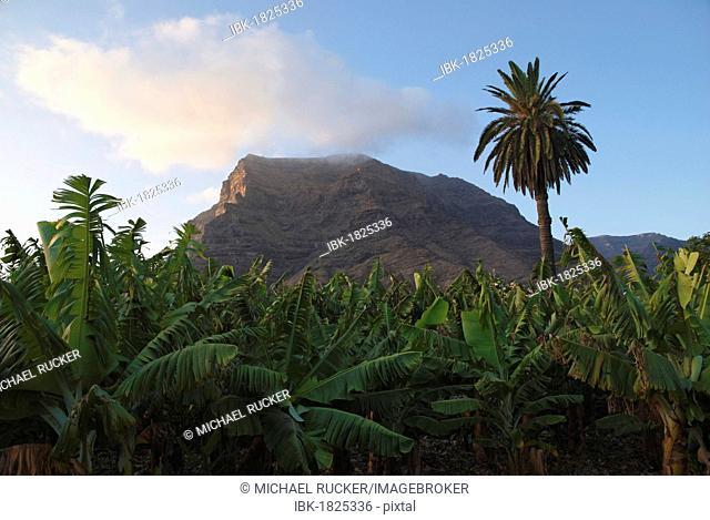 Banana plantation in Valle Gran Ray, La Gomera, Canary Islands, Spain, Europe