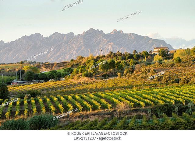 Buildings in extensive vineyards in the wine qualified region of Penedes, Spain