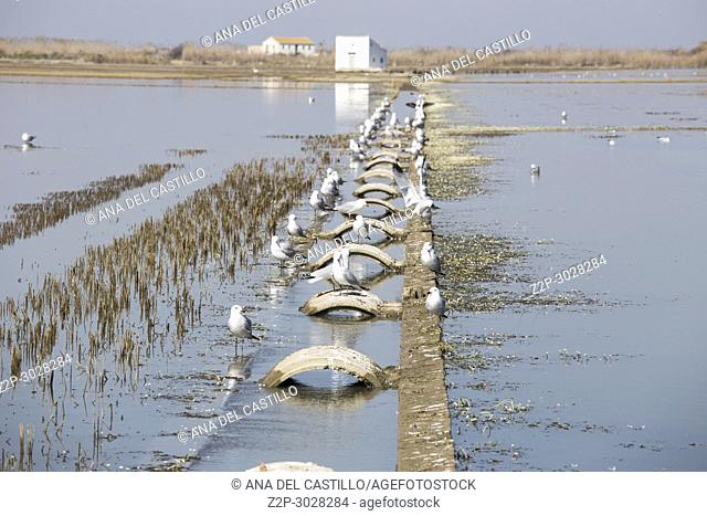 Flooded rice paddy Sueca Spain