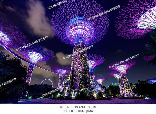Purple Supertree Grove at night, Singapore, South East Asia
