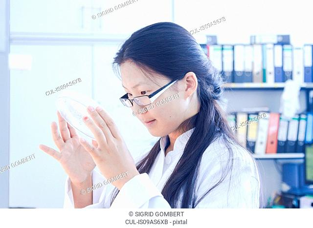 Female scientist looking at petri dish specimen in laboratory