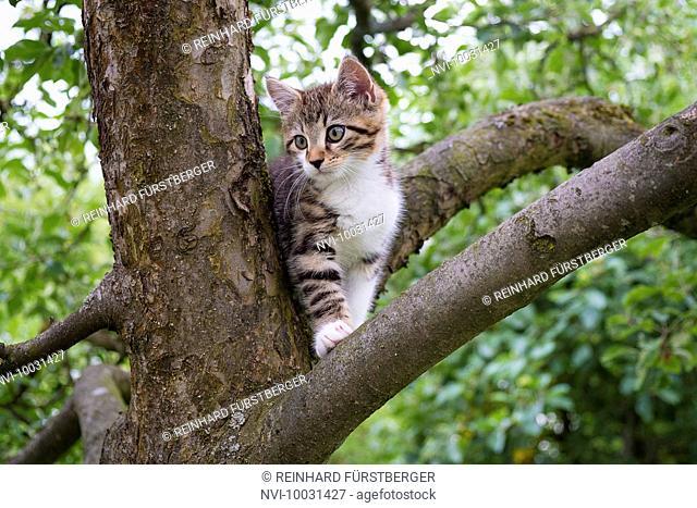 Kitten climbs on a tree