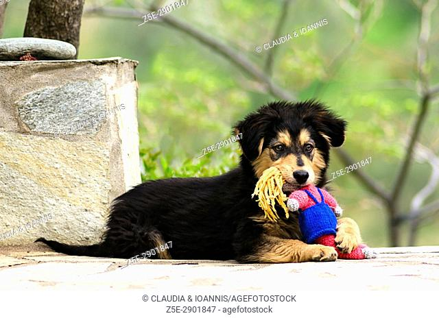 Puppy lying outdoors with a toy in his muzzle