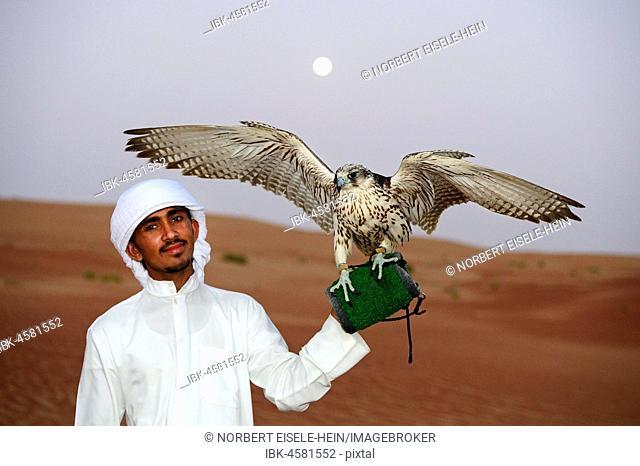 Falconer with Falcon, Liwa Desert, Abu Dhabi, United Arab Emirates