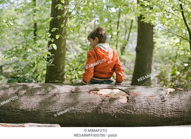 Germany, Bielefeld, boy sitting on log in forest
