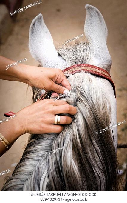 Woman's hand braiding a horse's mane