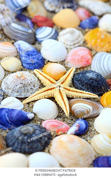 1, 5, arm, biodiversity, detail, Great Britain, coast, macro, mass, sea, sea animal, amount, crowd, mussel, mussels, patterns, samples, close-up, nature