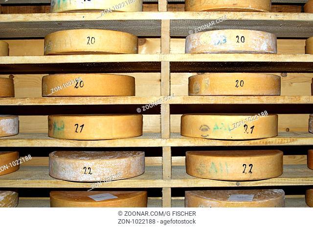 Runder Schweizer Alpkäse im Speicher einer Käserei vor der Chästeilet, Schweiz / Wheels of Swiss Alp cheese in the storehouse of a cheese dairy before the...