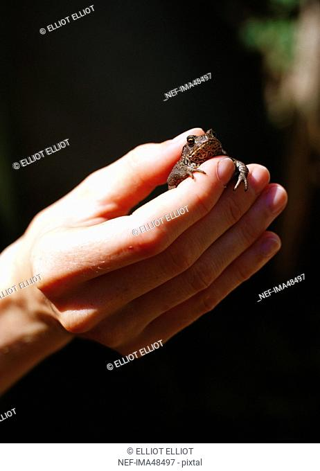 A hand holding a frog, Skanor, Skane, Sweden