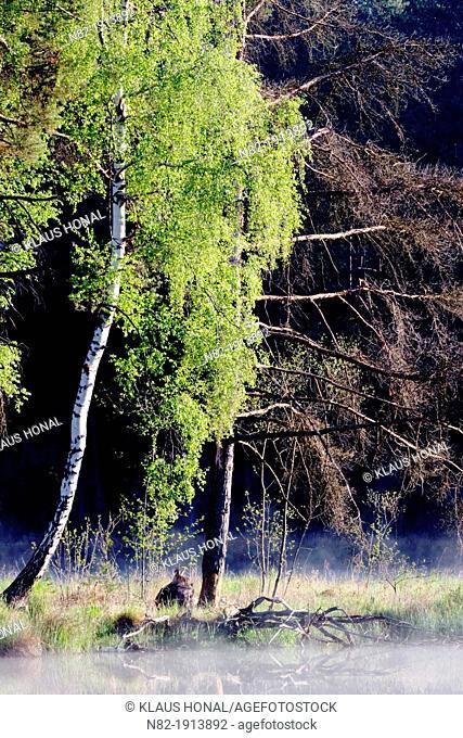 Morning mood at a bog - Bavaria/Germany
