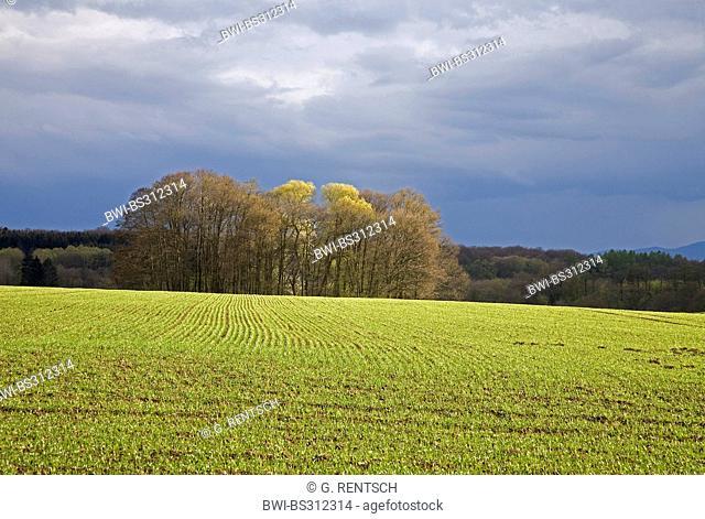dark sky over a wide sunlit field in spring, Germany, Hesse, Beberbeck