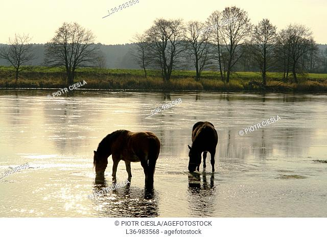 Bug river  Eastern Poland  Podlasie region