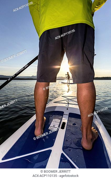 Stand up paddleboarders paddle in the evening on the waters of Comox Bay, the Comox Valley