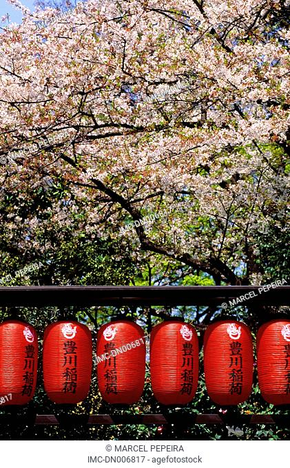 Japan, Tokyo, sherry blossoms