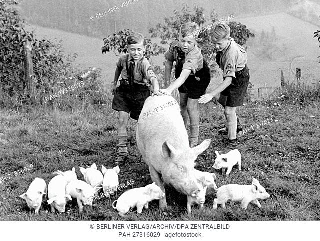 Boys of the German Youth stroking a pig with piglets at a youth hostel in the Vogtland area, in July 1937. - Unbekannt/Sachsen/Germany