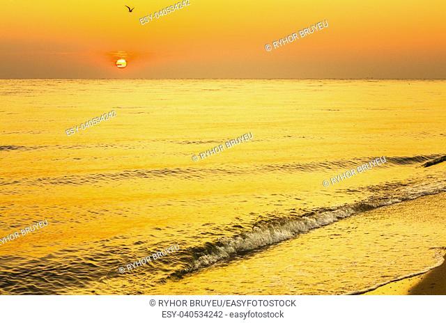 Soft Sea Ocean Waves Wash Over Golden Sand Background. Sunset, Sunrise, Sun