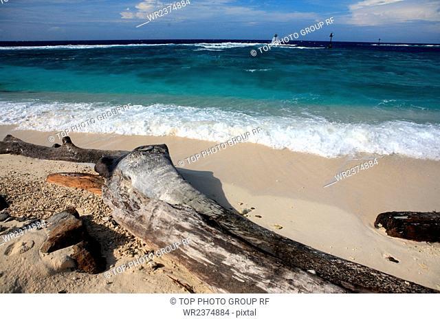 Zengmu Reef The South China Sea Malaysia Swallow Reef 2009