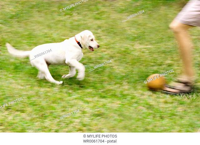 fetching ball