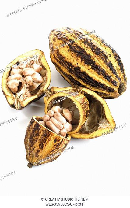 Cacao plant, husk and beans, elevated view