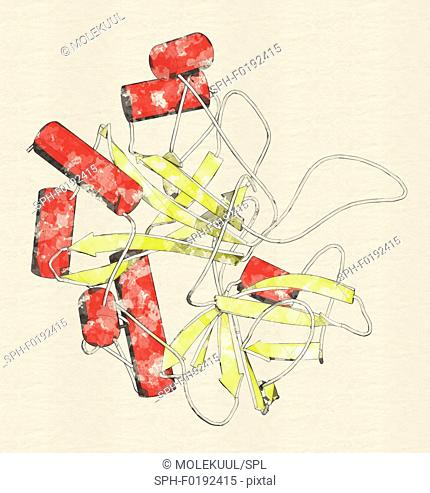 Thrombin enzyme molecule, illustration