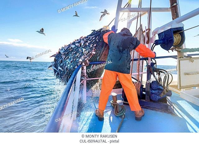 Fisherman emptying net full of fish into hold on trawler