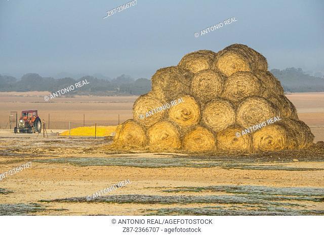 Straw bales, Paraje de Botas in fog, Almansa, Albacete province, Castilla-La Mancha, Spain