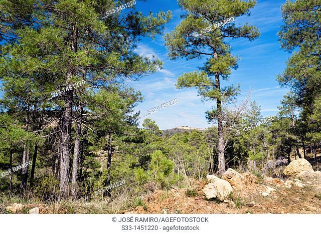 Serranía de Cuenca  Castilla la Mancha  Spain