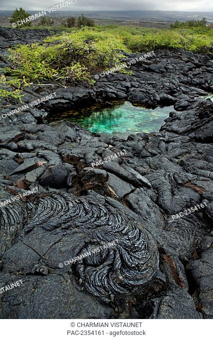 Saltwater tidepool in the midst of hardened pahoehoe lava (1856 lava flow from Mauna Loa); North Kona, Big Island, Hawaii, United States of America