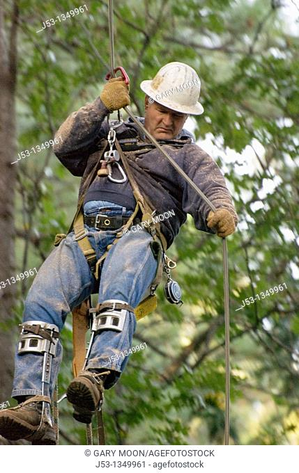 Logger descending from tree using rope and friction device