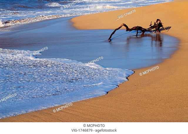 Spider like driftwood on shores of Moomomi Beach - Hawaii, USA; Amerika, 21/04/2006