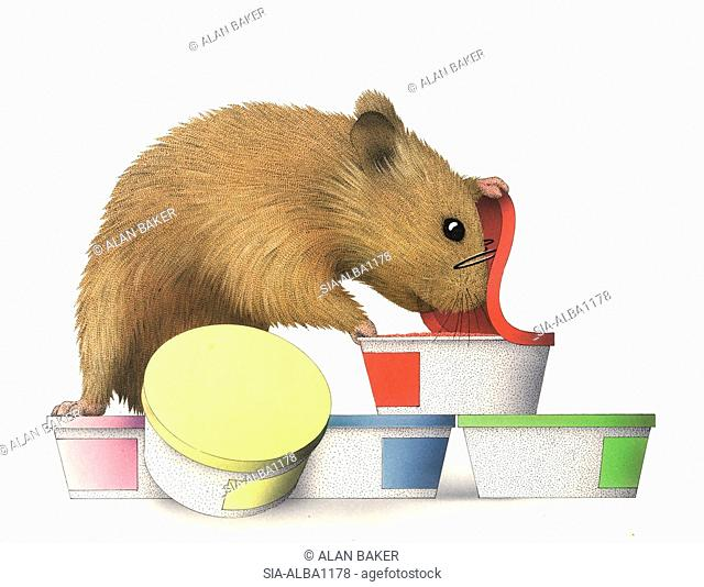 Mouse looking into colorful containers