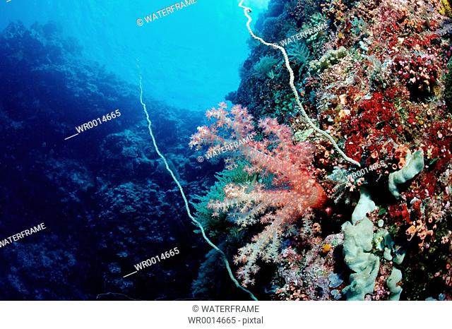 Colorfully Coral Reef, Pacific, Micronesia, Palau