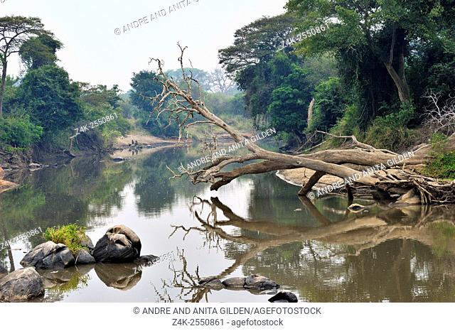 View on the Grumeti river with overhanging dead tree reflecting in water, Serengeti national park, Tanzania