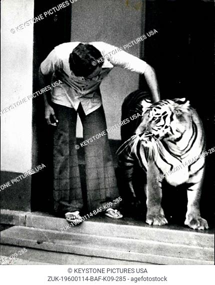 1968 - Hold that tiger! if you're worried about burglars, how about this watchdog with a difference? In a small village in India this striped beauty has become...