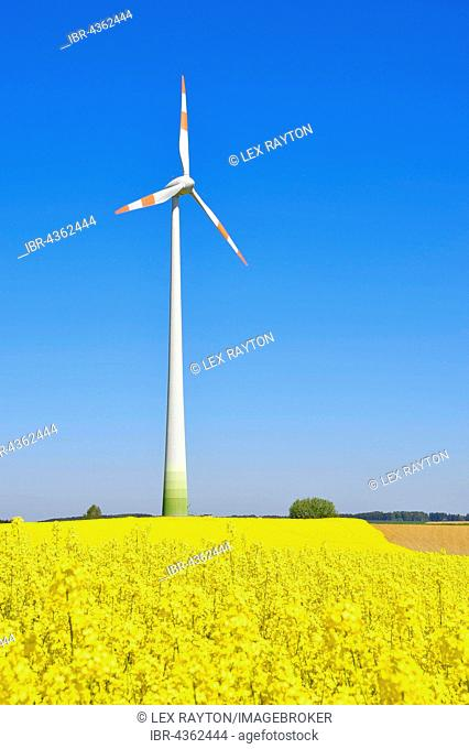 Wind turbine with rape field, canola field, Au in der Hallertau, Pfaffenhofen an der Ilm, Bavaria, Germany