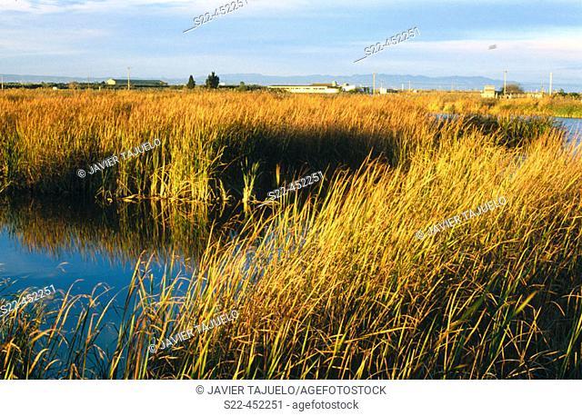 Ebro River Delta Natural Park. Tarragona province, Catalonia, Spain
