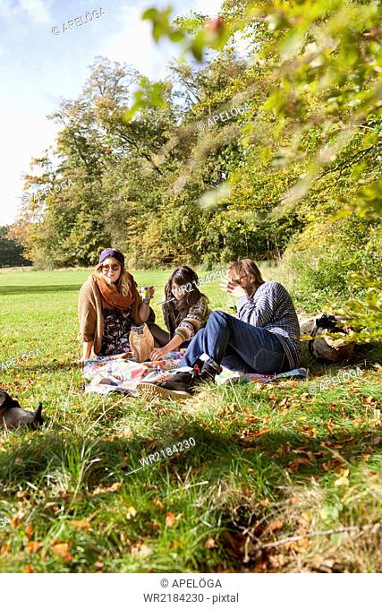 Group of friends having a picnic in forest