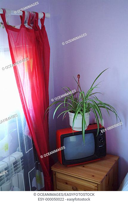 Bedroom: plant and television in corner
