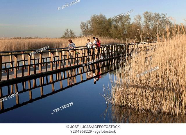 Tablas de Daimiel National Park, Ciudad Real-province, Castilla - La Mancha, Spain, Europe