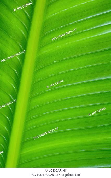 Close-up detail of a Palm leaf