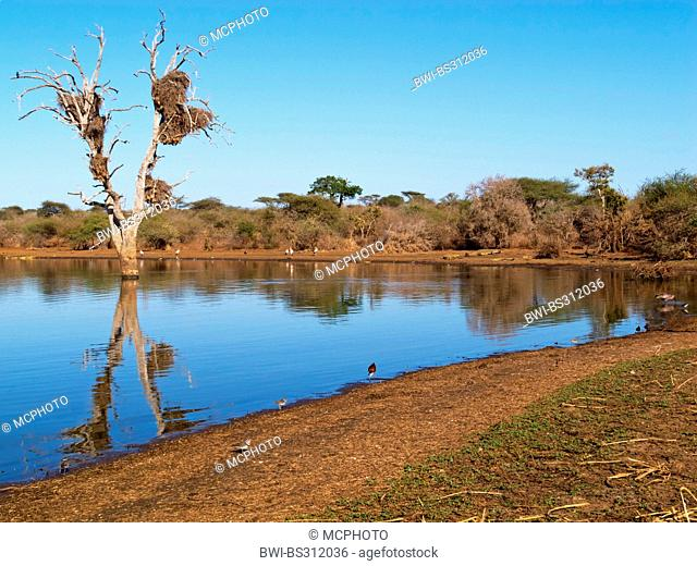dead tree in a lake at Sunset dam, South Africa, Krueger National Park, Lower Sabie Camp