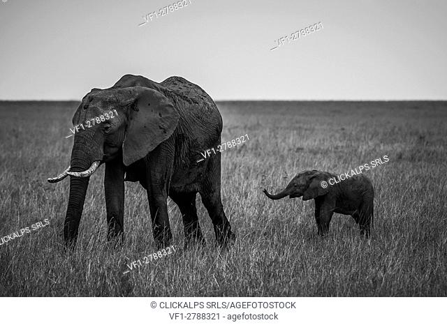 Masai Mara Park, Kenya, Africa